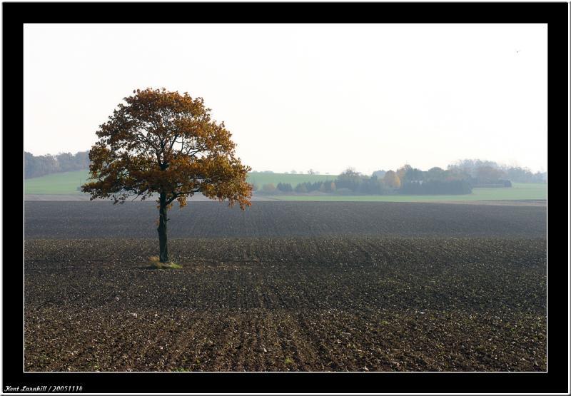 November - One tree - One year