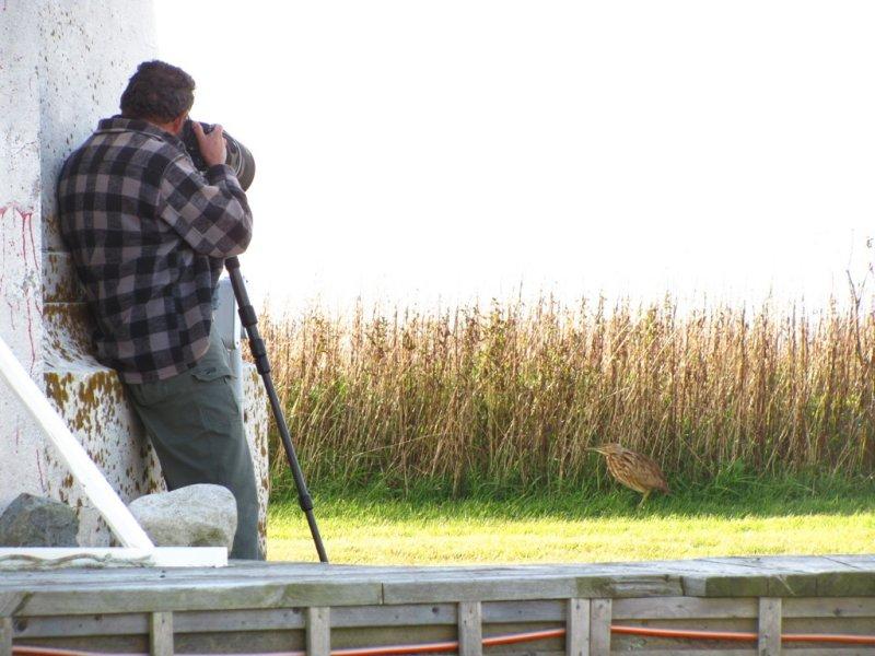 017  SHOOTING BITTERNS ON MSI