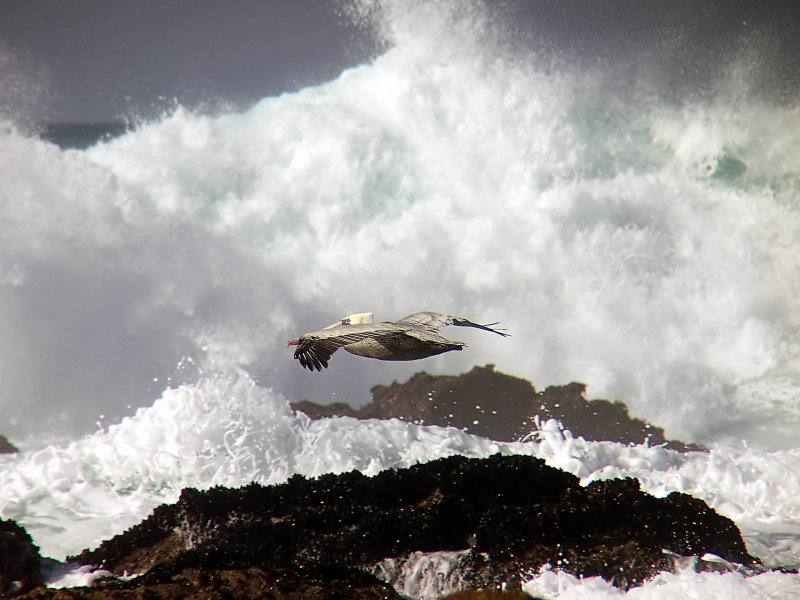 12 ex pelican over huge waves mod.jpg