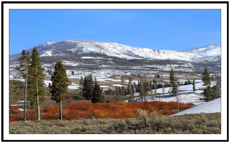 Landscape in the Yellowstone