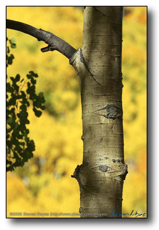 Colorado : Road Kill : Bark