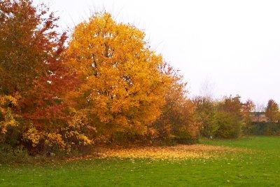 2011-10-28 Lundegaarden