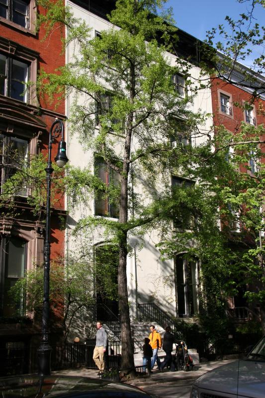 Ginkgo Tree & Street View