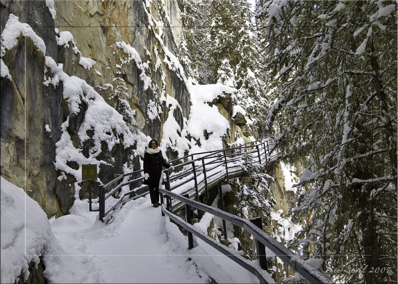 Johnston canyon trail leading in.jpg