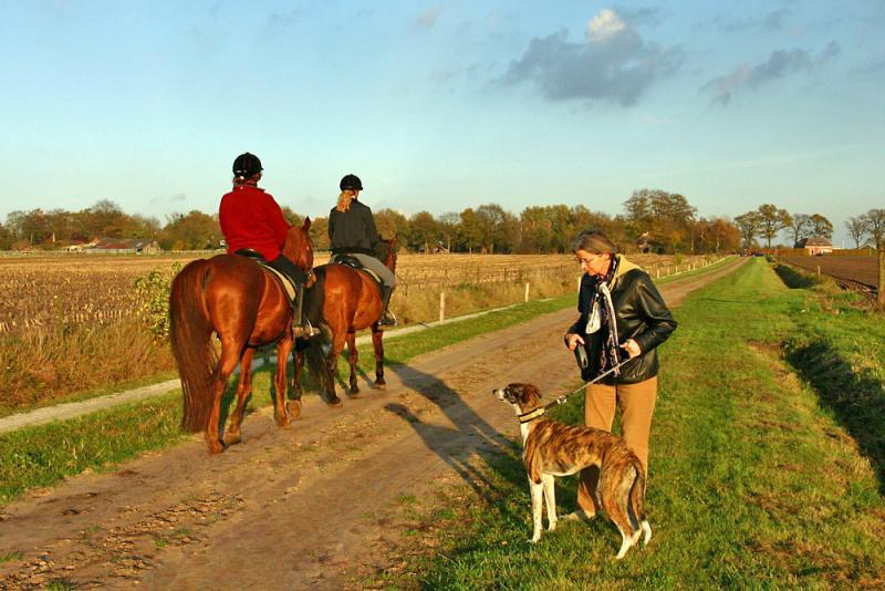 Horses passing