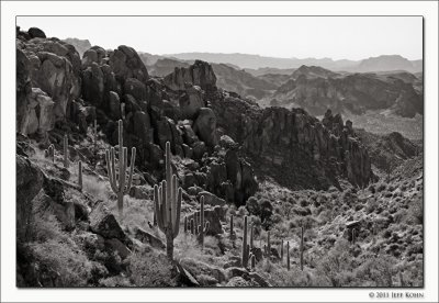 Cactus Country Image Gallery