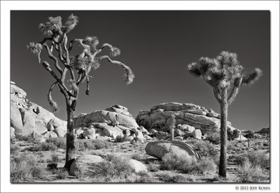 Joshua Tree National Park Image Gallery