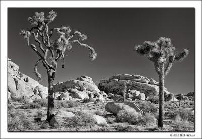 Joshua Tree National Park Image Gallery