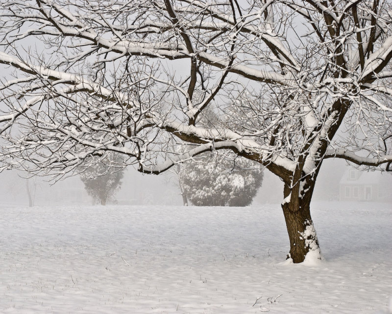 1/23/08 - Let it snow<br><font size=3>DSC_0217_aw.jpg</font>