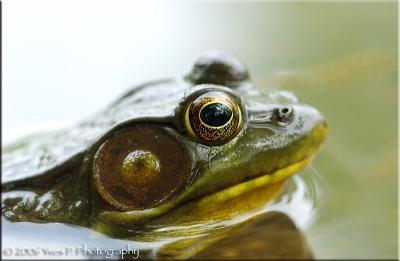 Froggy ...