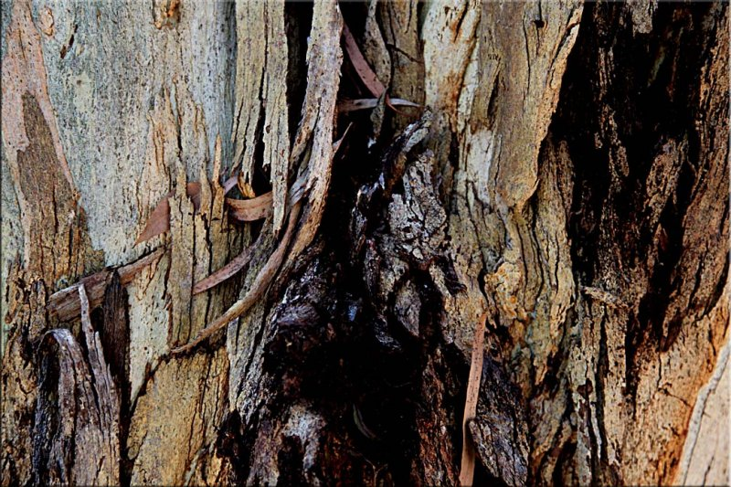 Gumtree bark