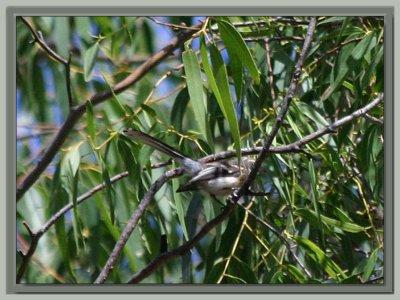 My Second bird shot