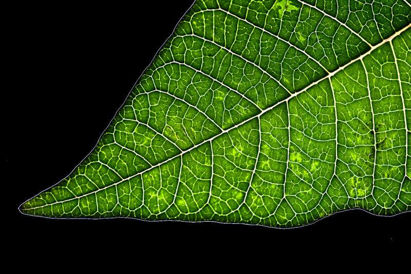 7 January - just a leaf