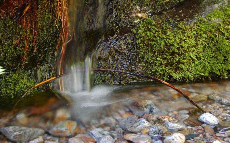 Spring Near Hidden Falls