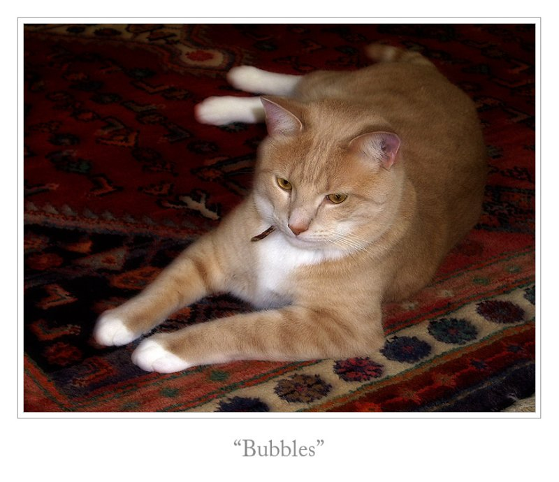 Bubbles - soft focus