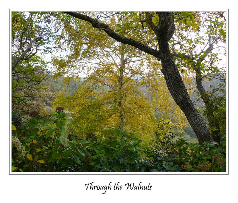 Through the walnuts