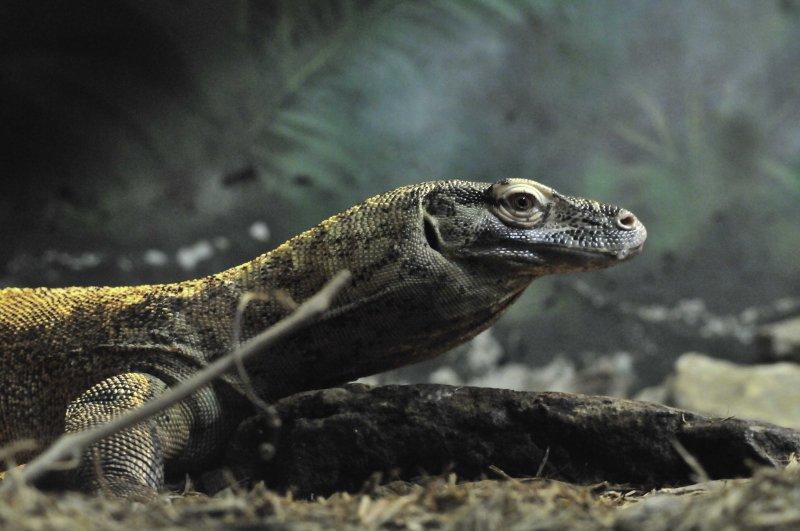 San Antonio Zoo 2011