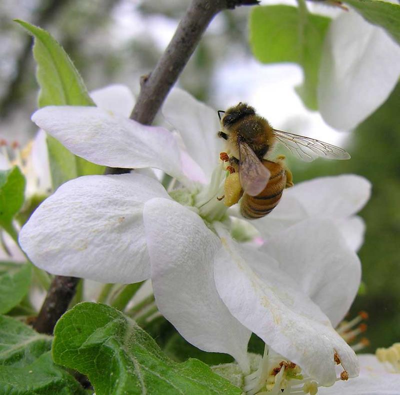 bees-6975-large.jpg