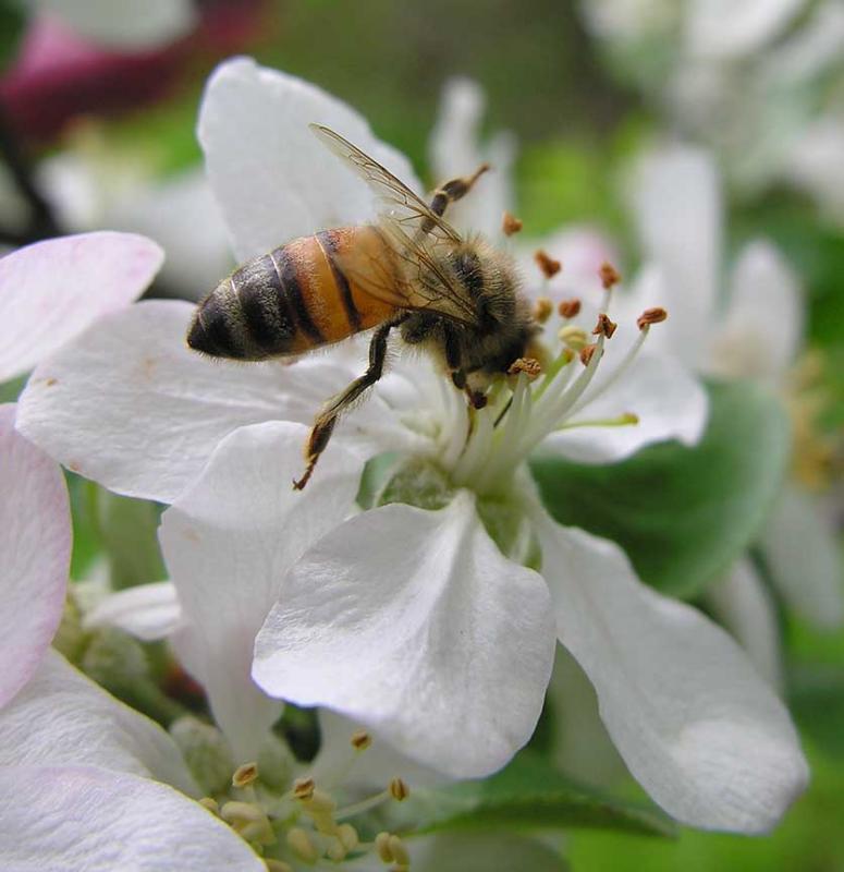 bees-7022-large.jpg