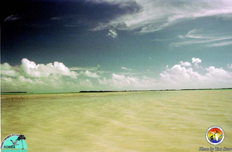 Florida Bay mud bank carbonate mud in water.jpg
