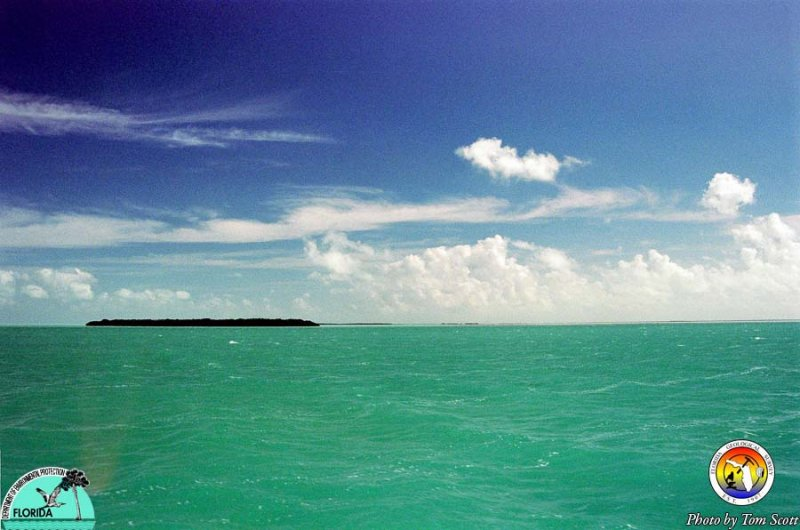 Florida Bay whitecaps.jpg