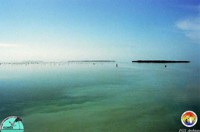 Keys Florida Bay sampling3.jpg