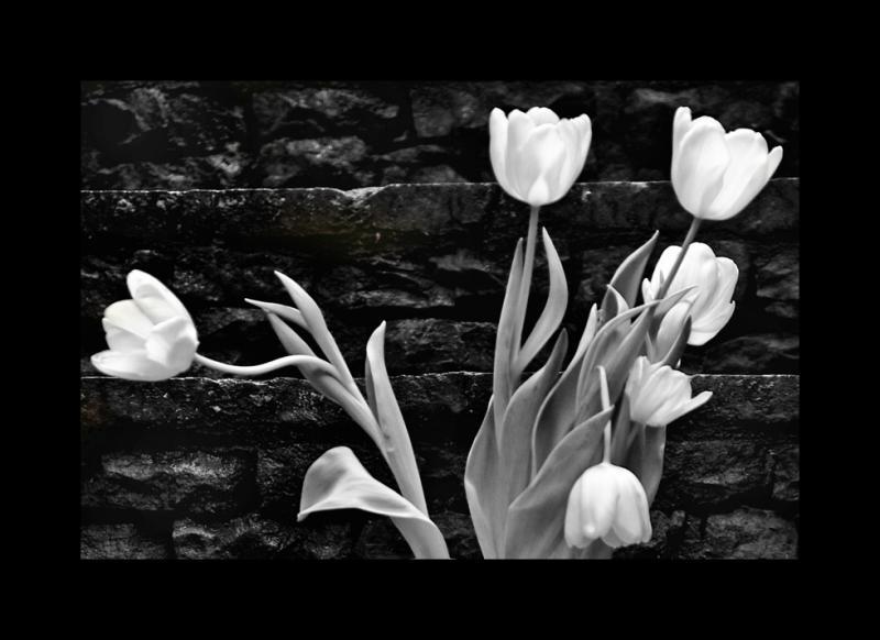 tulips & stone