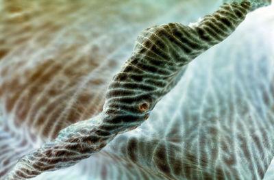 Dried flower petal (negative)<p>DCS00610