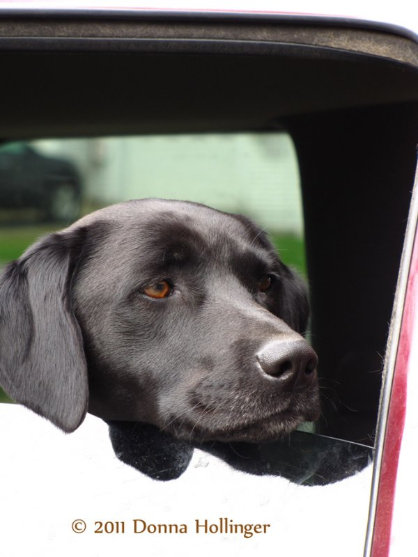 Maggie in the car