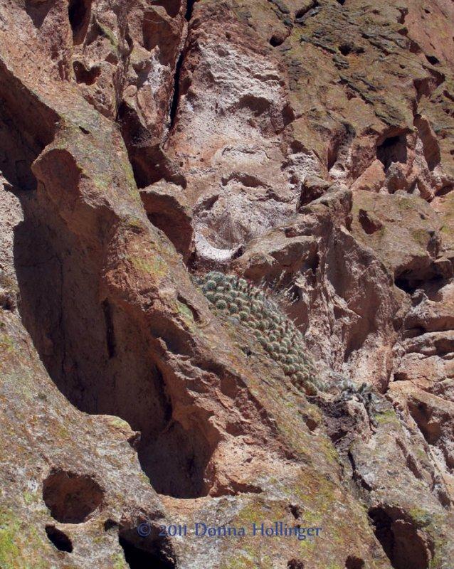Cactus Flowering on Rock