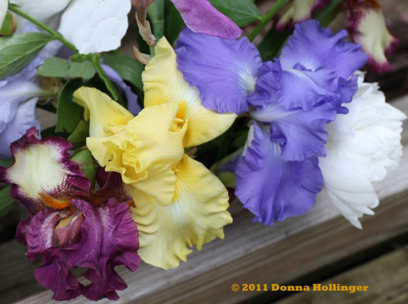 Three Irises(and a peony) in a bouquet
