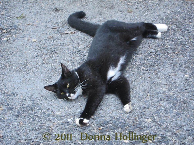 Jimi stretching out in the driveway