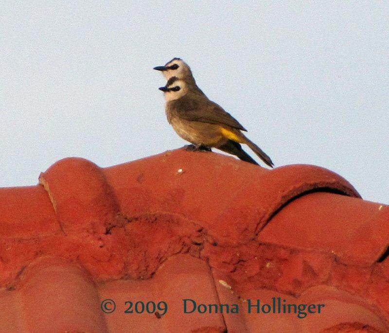 780.birds.camb.0601.jpg