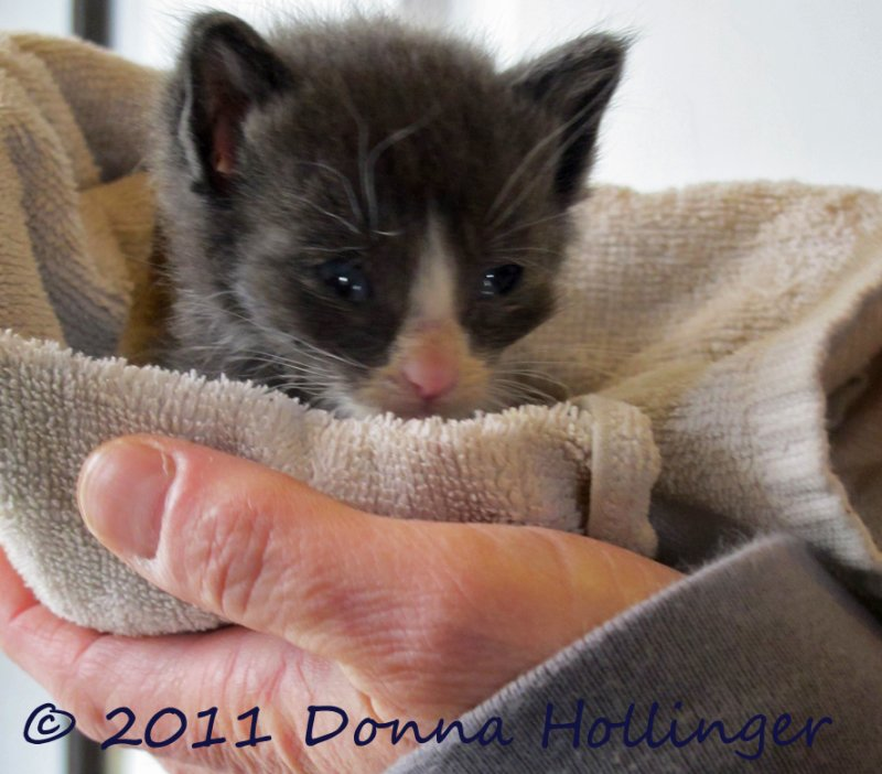 Cathy found a ten day old kitten at Waverly Oaks
