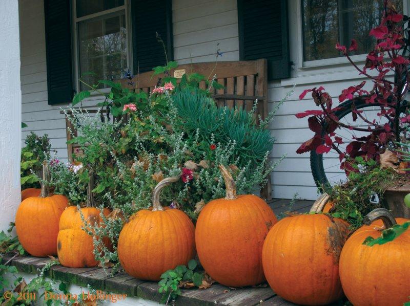 Pumpkins at the Mountain School
