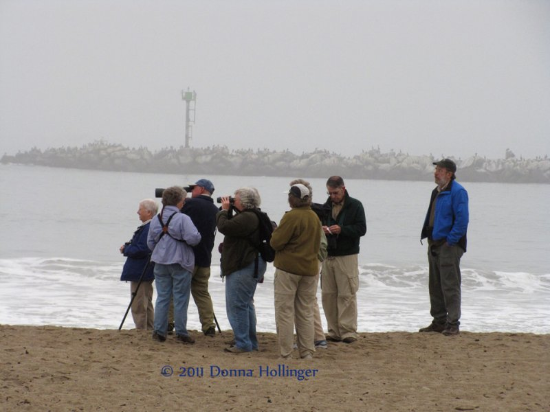 Birding While Waiting for the Island Packer