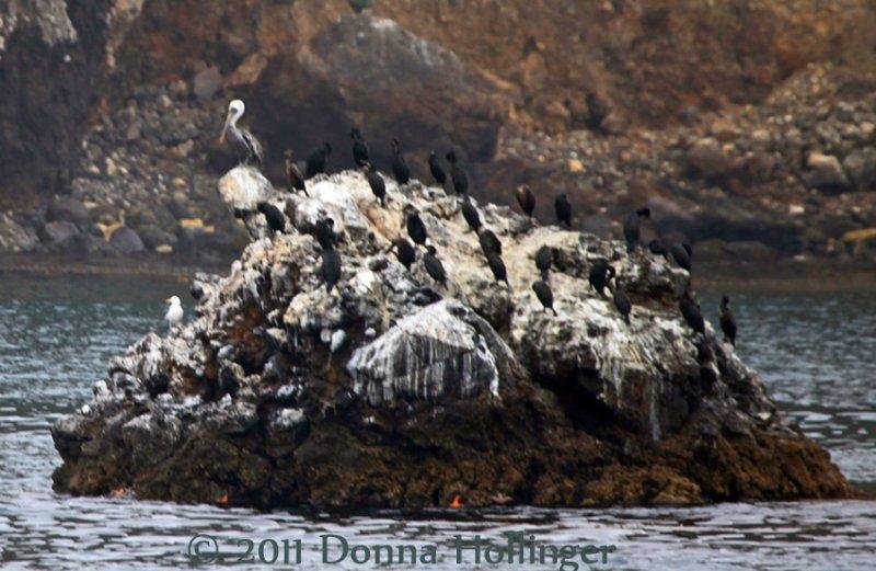 850.pelican.island.5490.jpg