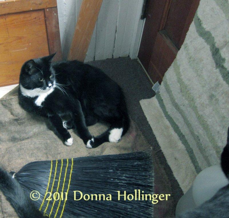 Jimi watching the Cat Door.