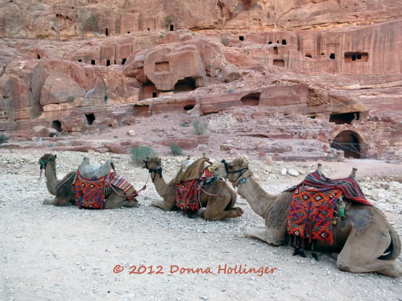 Three Camels in Petra