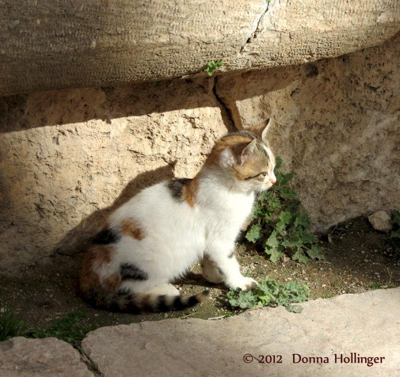 Roman Ruins in Jerassa and the Kitty