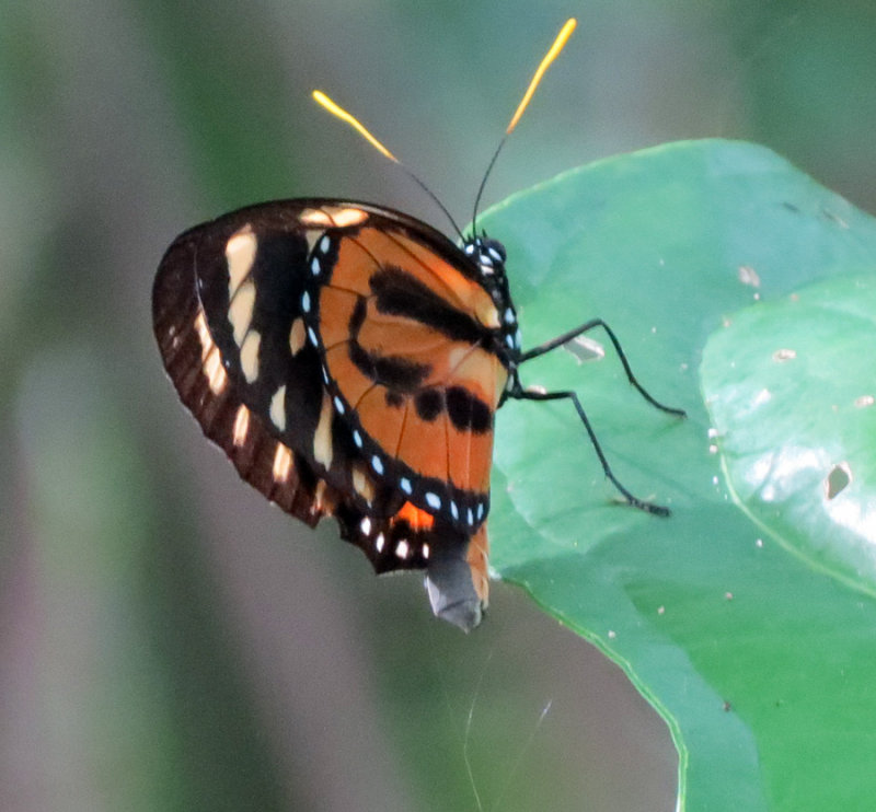 Orange, Red, Black and Yellow Butterfly