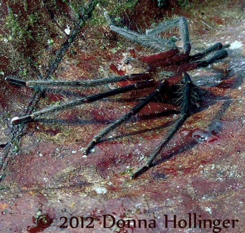 Wolf Spider from Hugh