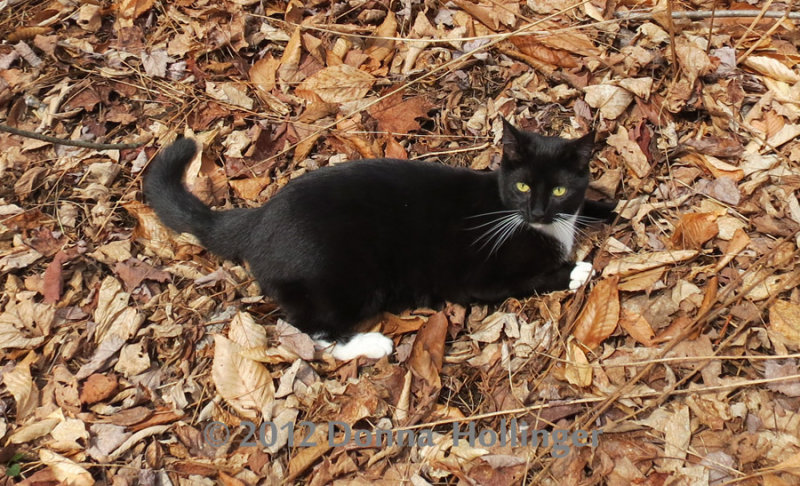 Rosie Kitty in the Leaves