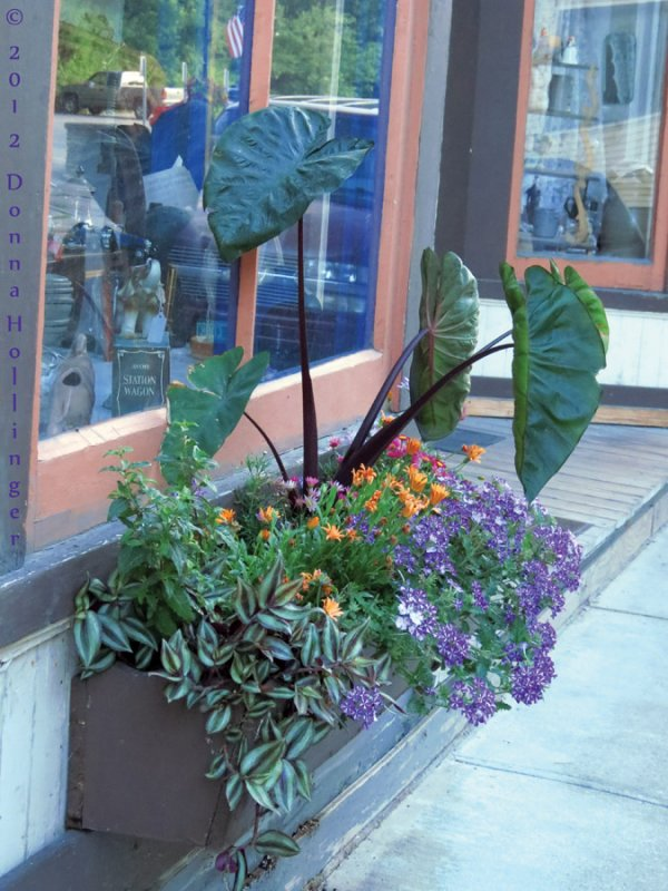 Window box  on Bethels Main Street