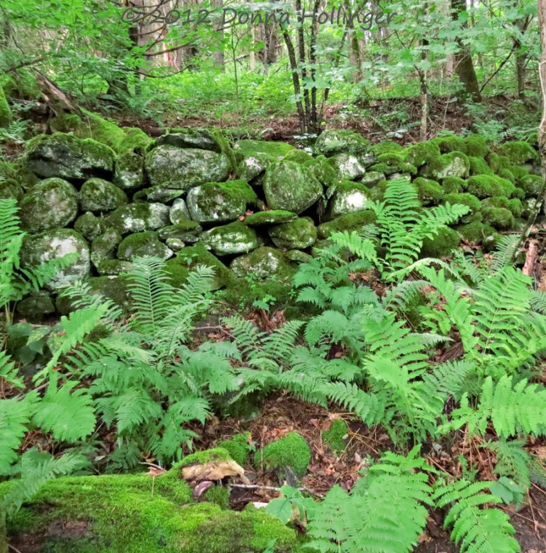 Stone Wall withn Moss and Fern