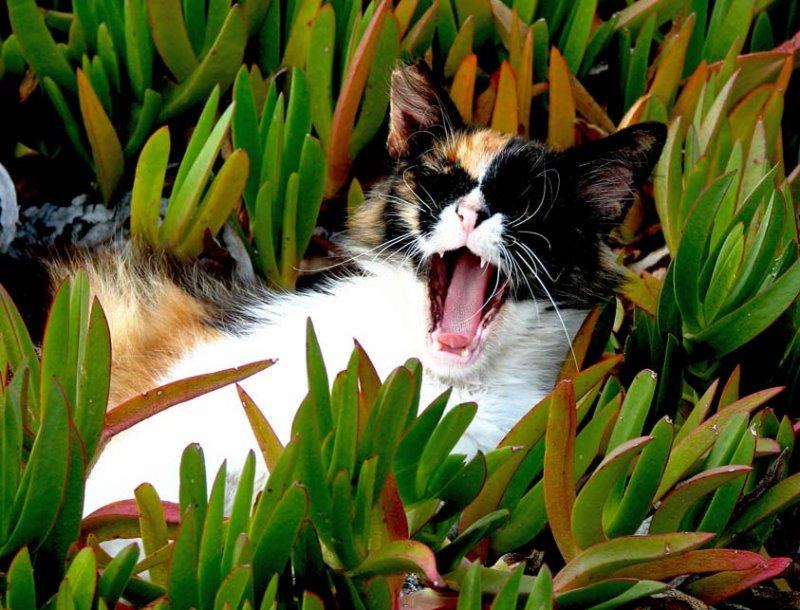 Feral cat in Cyprus