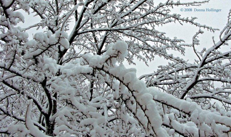 Snow like Cotton Balls
