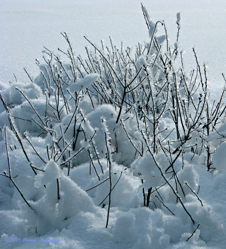 Ice Crystals Growing on the Pond
