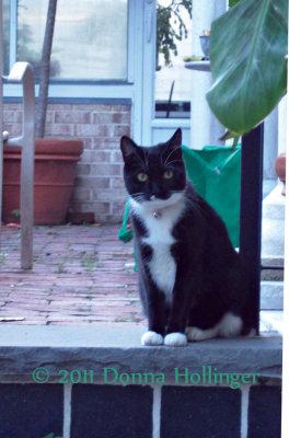 Pedey is Cathys Kitty