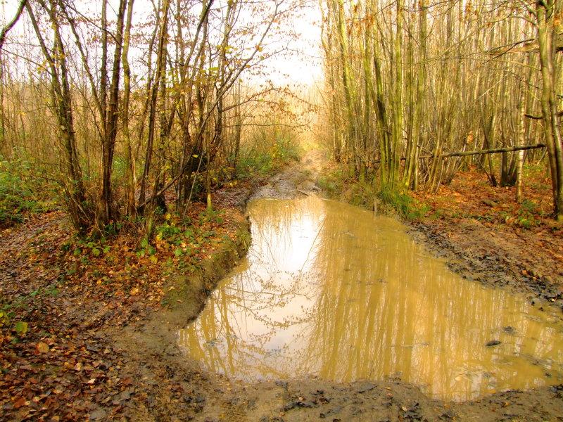 Wealdway  path  in  Whitehorse  Wood / 4